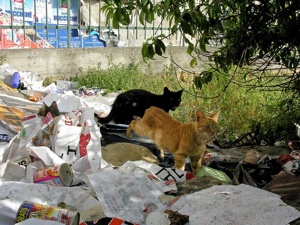 #Palermo Cats Playing in Garbage: What's Not to Like? @SteveGiovinco