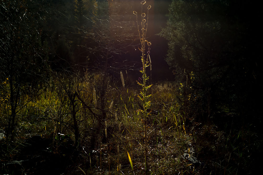 Searingly Clear X-ray Like View In the Meadow: Wyoming at Twilight, Steve Giovinco