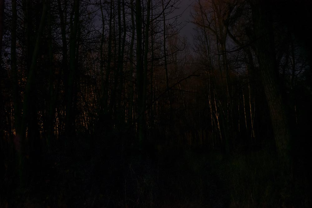 Forest, 2am: Until the End of the World