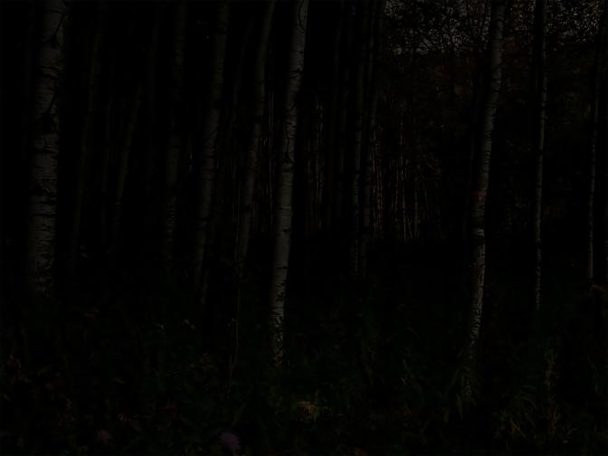 Nightlandscape: Mysterious Forest at Night, @SteveGiovinco