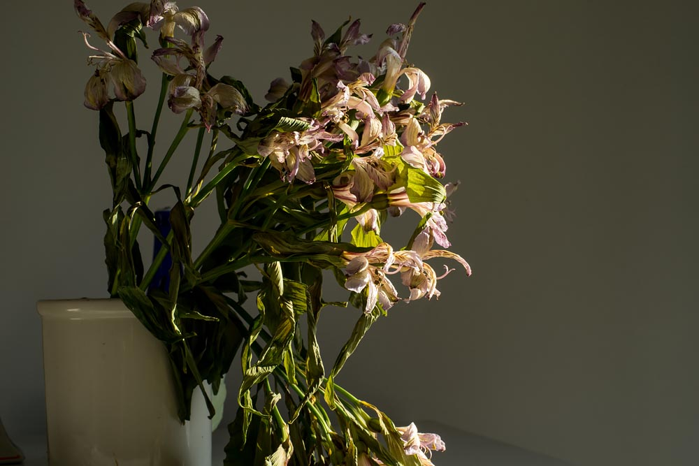 Flowers Fading in Morning Light: Father Project @SteveGiovinco