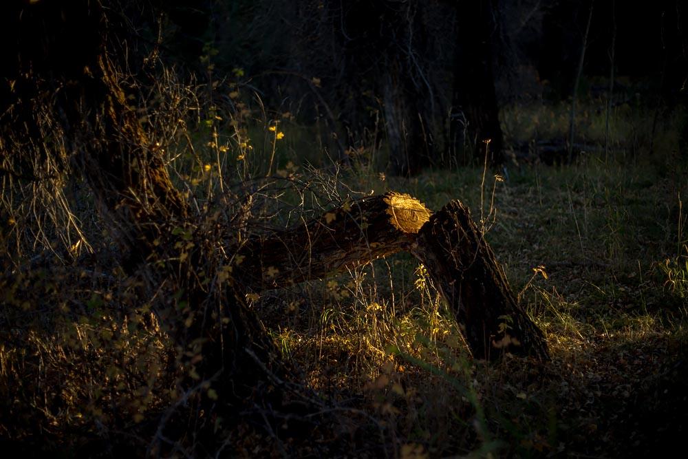 The Translucent Stump: Wyoming Twilight Night Landscape Photograph Steve Giovinco