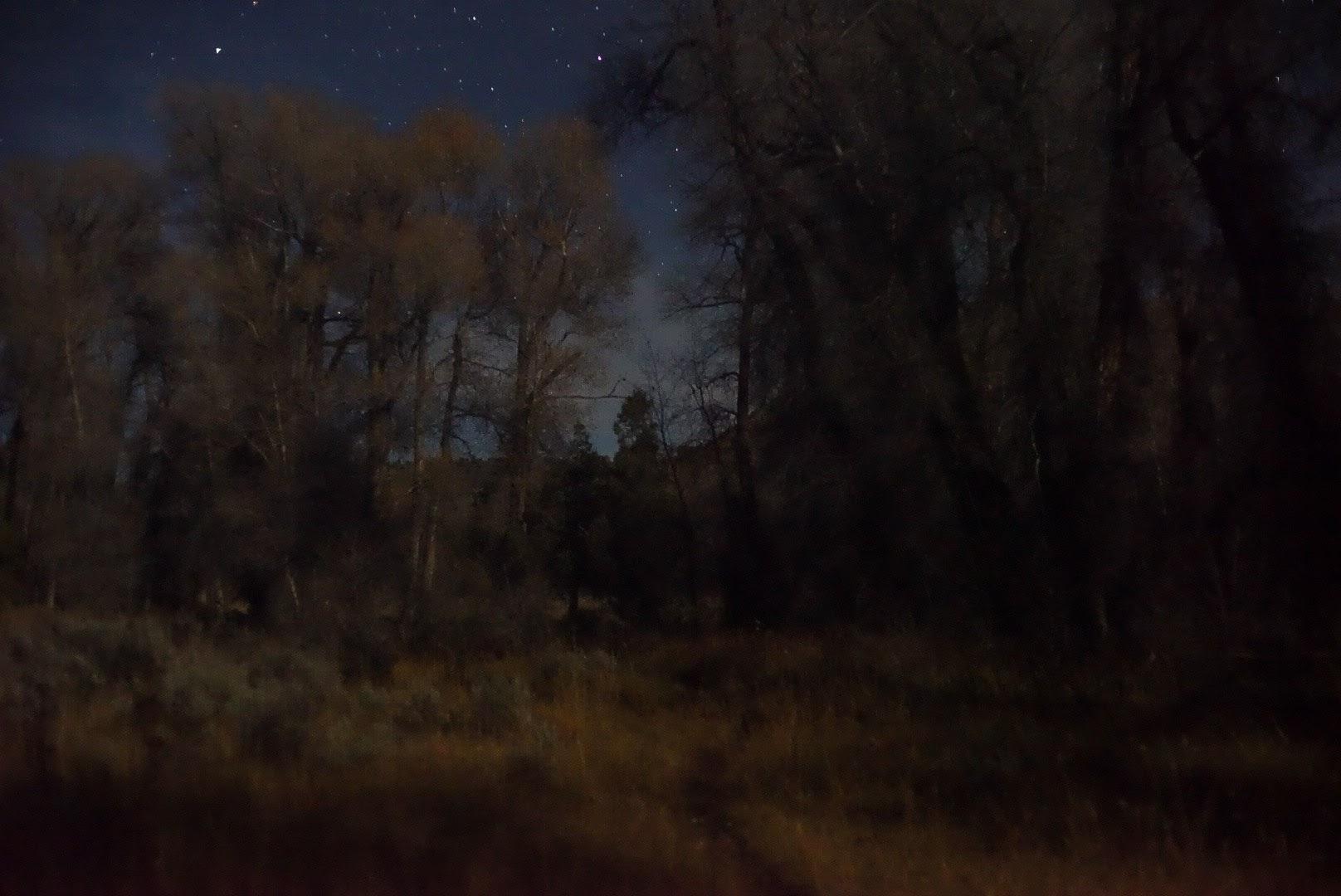 Night landscape photographs trees path, Wyoming, Steve Giovinco
