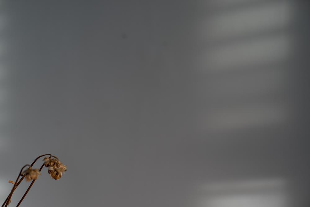 Fine art photography commission (flowers in light) for Monegraph, Steve Giovinco