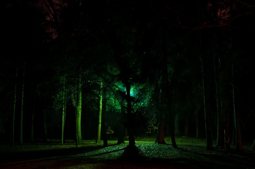 Until the End of the World: Eerie Night Tree