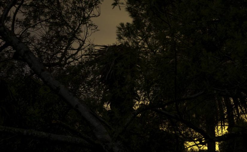 The Secret, Hidden in Night Among the Palms: Photo Show