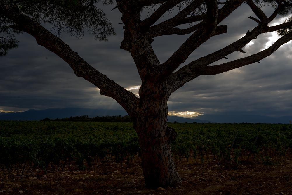 Artiste en résidence, Rhapsodic Night Landscape Photographs and Exhibition en France